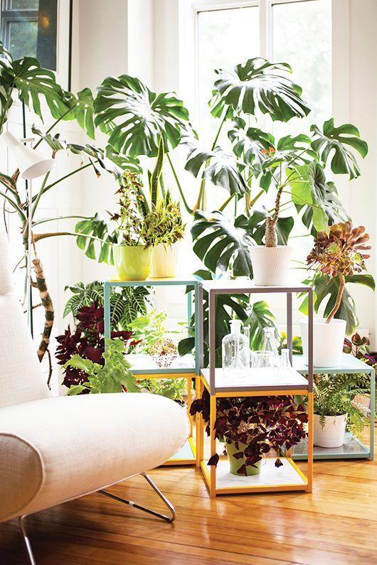 Interni Urban Jungle